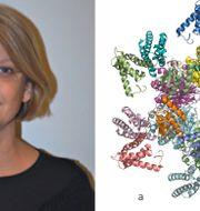 Viveka Alfredsson, professor fysikalisk kemi vid Lunds universitet/3D-strukturer  Lunds universitet/Johan Jarnestad/Kungl. Vetenskapsakademien