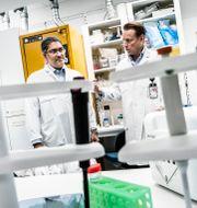 Ali Mirazimi till vänster. Forskarkollegan Matti Sällberg till höger.  Magnus Hjalmarson Neideman/SvD/TT / TT NYHETSBYRÅN