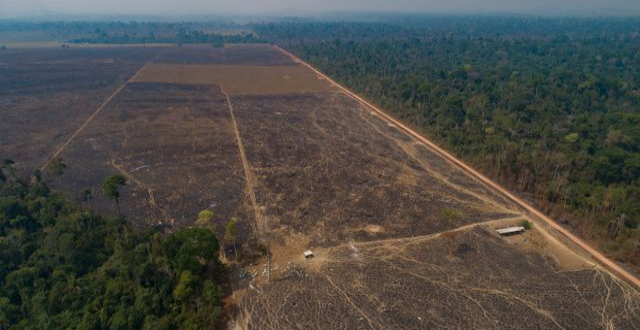 Mark som nyligen bränts och avskogats i den brasilianska delstaten Pará Andre Penner / TT NYHETSBYRÅN