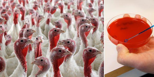Illustrationsbilder på antibiotikaresistens. TT