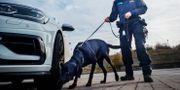 Hunden Atte tillsammans med sin förare Josefin Frid.  Anders Roos / TT NYHETSBYRÅN