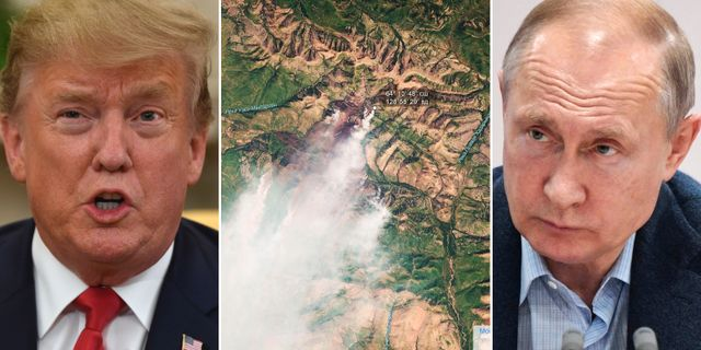 Donald Trump/jättebranden i Sibirien/Vladimir Putin. TT