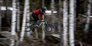 Person som cyklar downhill i Järvsö.  Pontus Lundahl/TT / TT NYHETSBYRÅN
