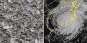 Arkivbild på flyttfåglar (t v), stormens position på fredagen (t h). TT