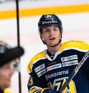Lias Andersson i HV71. JÖRGEN JARNBERGER / BILDBYRÅN