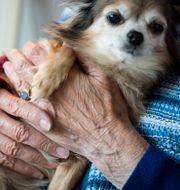 En äldre kvinna kramar om en hund på ett äldreboende. Arkivbild.  Pontus Lundahl/TT / TT NYHETSBYRÅN