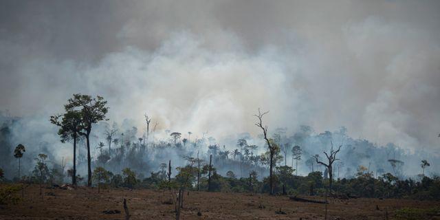 En skogsbrand i Altamira, Brasilien, i augusti.  Leo Correa / TT NYHETSBYRÅN