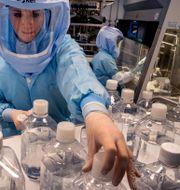 Bild från Biontechs laboratorium, pionjärer inom RNA-teknik,  Michael Probst / TT NYHETSBYRÅN
