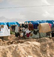 Arkivbild från al-Hol-lägret i Syrien. Maya Alleruzzo / TT NYHETSBYRÅN