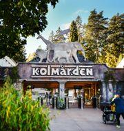 Kolmårdens djurpark utanför Norrköping. Pontus Lundahl/TT / TT NYHETSBYRÅN