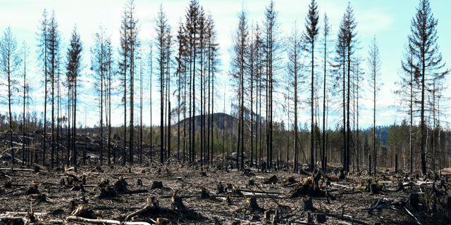 Efter branden i Härjedalen 2018. Pontus Lundahl/TT / TT NYHETSBYRÅN