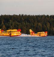 Franska och italienska brandflyg under en tidigare insats i Sverige. FREDRIK PERSSON / TT / TT NYHETSBYRÅN