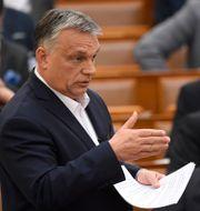 Ungerns premiärminister Viktor Orbán Tamas Kovacs / TT NYHETSBYRÅN
