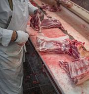 Arkivbild på när en gris styckas. Meli Petersson Ellafi / TT / TT NYHETSBYRÅN