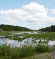 Våtmarker är viktiga för många arter. JANERIK HENRIKSSON / TT / TT NYHETSBYRÅN