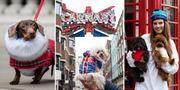 Storbritanniens huvudstad förvandlas till en enda hundfest från 24 till 31 mars. London Dog Week/ @oliver_george_photography
