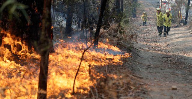 Brandmän som bekämpar lågorna i Australien. Rick Rycroft / TT NYHETSBYRÅN