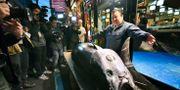 Kiyoshi Kimura poserar med den rekorddyra tonfisken. Koki Sengoku / TT NYHETSBYRÅN