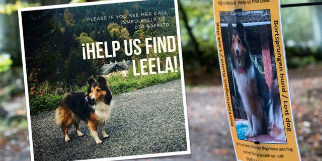 Hunden Leela har varit försvunnen i nio månader.  TT / Info about Leela.