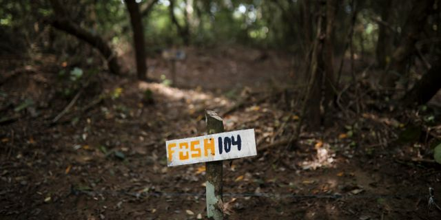 Over 50 doda i mexikansk massgrav 3