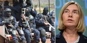 Antinterrorstyrkor på plats i Mali / Federica Mogherini TT