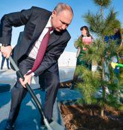 Putin och kosmonauten Valentina Tereshkova planterar ett träd.  Alexei Druzhinin / TT NYHETSBYRÅN