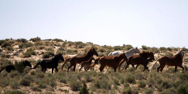 Navajo reservatet. Megan Farmer / TT / NTB Scanpix