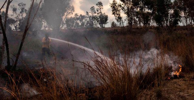 Gräsbrand på den israeliska sidan av gränsen mot Gaza.  Tsafrir Abayov / TT NYHETSBYRÅN
