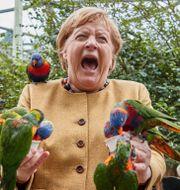 Angela Merkel besök på Marlow Bird Park Georg Wendt / TT NYHETSBYRÅN