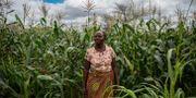 Imelda Hicoombolwa, jordbrukare i Zambia. GUILLEM SARTORIO / AFP