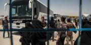 al-Hol-lägret i Syrien. Baderkhan Ahmad / TT NYHETSBYRÅN