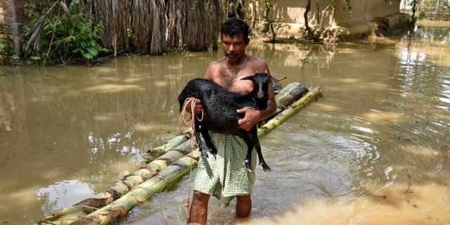 En man bär en get genom vattenmassorna i delstaten Assam, Indien.  ANUWAR HAZARIKA / TT NYHETSBYRÅN
