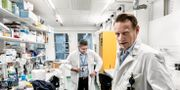 Professor Matti Selberg och kollegan professor Ali Mirazimi på Karolinska Institutet. Magnus Hjalmarson Neideman/SvD/TT / TT NYHETSBYRÅN