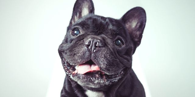 Nytt megamuseum för hundar slår upp i New York. Getty