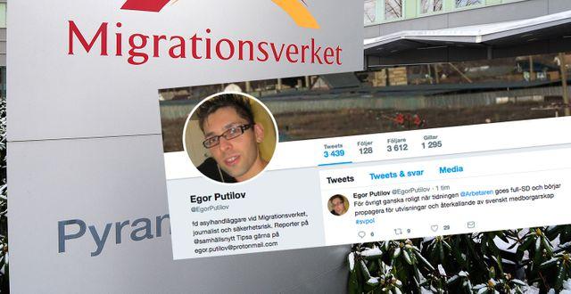 Collage, Migrationsverket och Egor Putilov på Twitter. TT/Egor Putilov, Twitter.