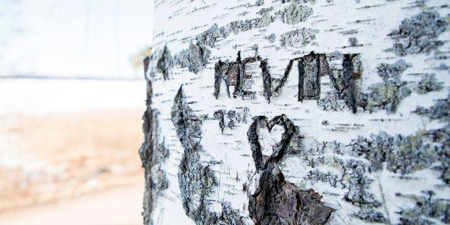 Ett hjärta inristat i en björk där Kevin dog 1998.  Adam Ihse/TT / TT NYHETSBYRÅN