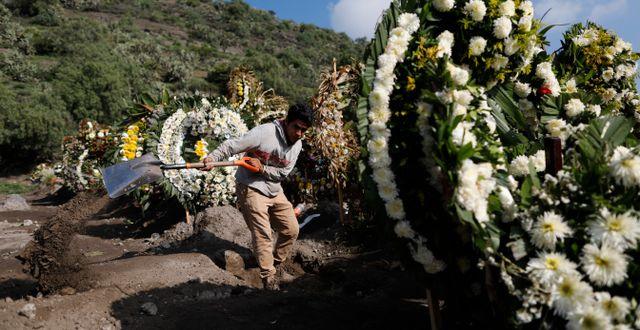 En man gräver en grav i Mexiko.  Rebecca Blackwell / TT NYHETSBYRÅN