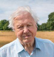 Sir David Attenborough.  Nick Shoolingin-Jordan / TT NYHETSBYRÅN