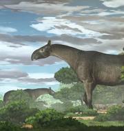 En illustration över hur jättenoshörningen kan ha sett ut. Yu Chen
