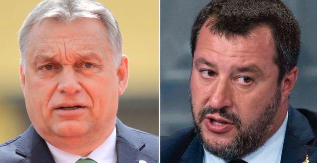 Viktor Orbán och Matteo Salvini. TT.