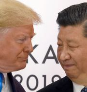 Trump och Xi Jinping. Susan Walsh / TT NYHETSBYRÅN