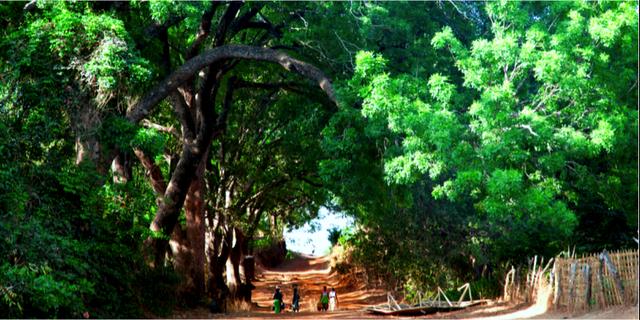 Guinea-Bissau - en välbevarad hemlighet. Istockphoto.