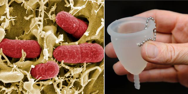 Bakterier/menskopp. TT