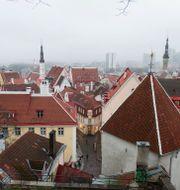 Estniska huvudstaden Tallinn. Stina Stjernkvist/TT / TT NYHETSBYRÅN