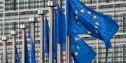 Flaggor utanför EU-kommissionen i Bryssel. Yves Logghe / TT NYHETSBYRÅN