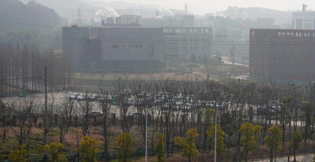 Labbet i Wuhan. Ng Han Guan / TT NYHETSBYRÅN
