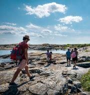 Människor på väg över klipporna till bad på den västra sidan av Käringön i Bohuslän. Mats Schagerström/TT / TT NYHETSBYRÅN