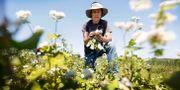 Bonden Andrew Dunham på sin farm i Grinell, Iowa. Illustrationsbild. Charlie Neibergall / TT NYHETSBYRÅN/ NTB Scanpix