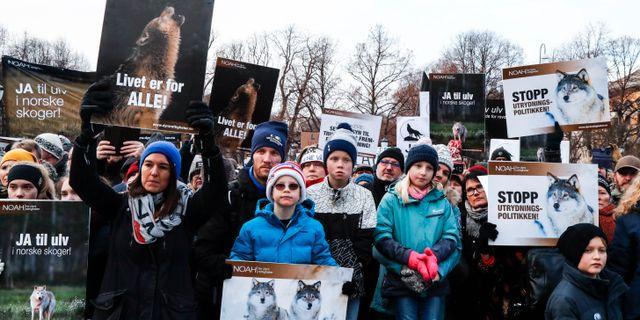 Demonstranter för att fler vargar ska få leva. Junge, Heiko / TT NYHETSBYRÅN