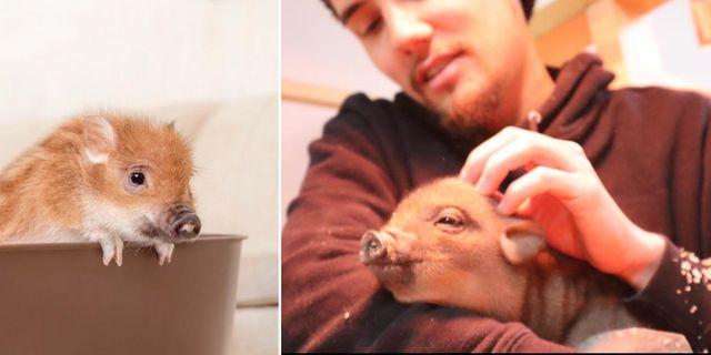Nya griskaféet Migpig ligger i området Meguro i Tokyo. mipig.co.jp